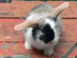 aneka olahan daging kelinci